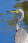 WATCHFUL