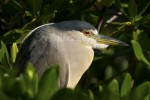 SCEPTIC
