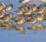 RESTING GATHERING OF THE CLAN