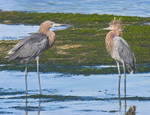 SAYS WHO?!..