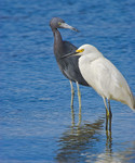 YOUR PLACE OR MINE?..