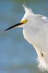 SITTING PRETTY