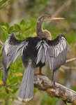 RIGHT TO THE POINT