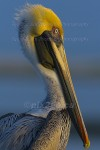 CATCHING THE 