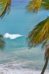 Highlight for Album: Barbados Flora